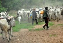 Fulani Herdsmen Kidnap Popular Enugu Monarch, Demands Ransom